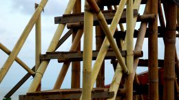 Bambus Kultur Und Natur